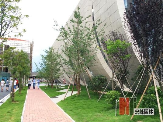 学校绿化设计